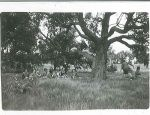 1950 Lunch Time - Foot of Mount Ainslie